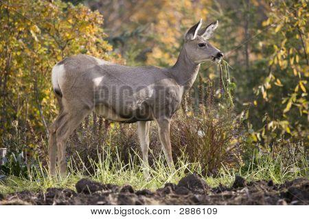 90 Deer In Garden