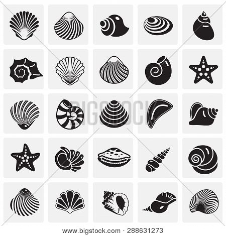 Sea Shell Icons Set On Squres Background For Graphic And Web Design. Simple Vector Sign. Internet Co