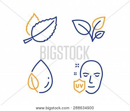 Leaves, Leaf Dew And Mint Leaves Icons Simple Set. Uv Protection Sign. Grow Plant, Water Drop, Menth