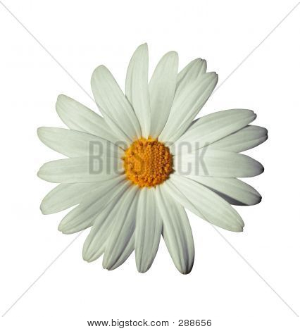 White Flower With Path