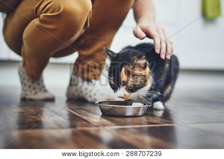 Domestic Life With Pet. Cute Cat Eating From Bowl At Home Kitchen.