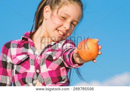 Kid Hold Ripe Apple Sunny Day. Healthy Nutrition Concept. Child Eat Ripe Apple Fall Harvest. Fruit V