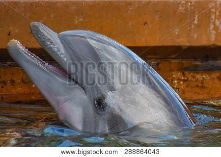 Orlando, Florida. March 09 2019. Nice Bottlenose Dolphin At Seaworld In International Drive Area .