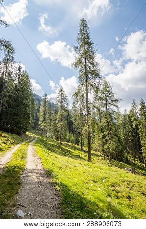 Alpine Landscape: Meadow, Forest, Mountains And Blue Sky