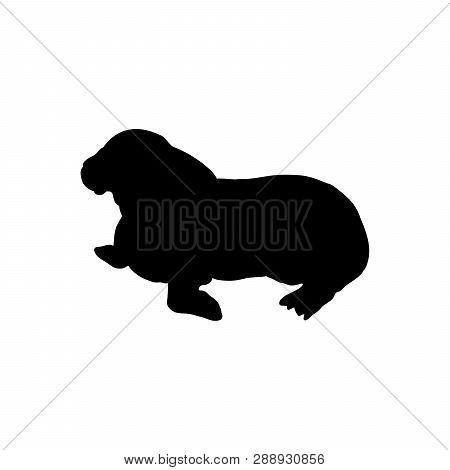 Cub Walrus Arctic Black Silhouette Animal. Vector Illustrator.