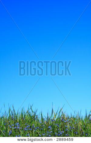 Blue Flower Grass