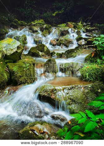 Stream in forest nature. Green forest stream. Nature. Stream. Natural environment. Forest nature. Brook in nature. Nature stream, branches and trees. Travel in nature.