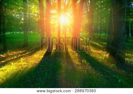 Spring landscape, spring trees in the park lit by soft sunset light