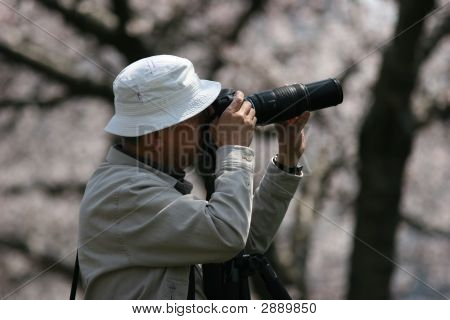Photographer Taking Picture Of Cherry Blossom In Spring