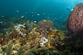 Seascape of a coral reef taken in north Tobago. poster