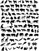100 black silhouettes of different animals. Vector poster