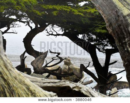 Carmel Pebble Beach