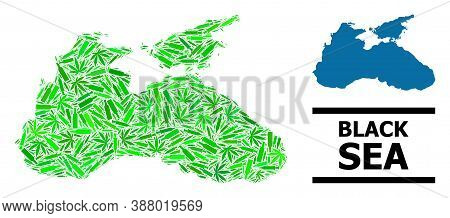 Drugs Mosaic And Solid Map Of Black Sea. Vector Map Of Black Sea Is Created Of Randomized Syringes,