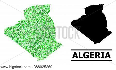 Drugs Mosaic And Usual Map Of Algeria. Vector Map Of Algeria Is Designed From Random Vaccine Doses,