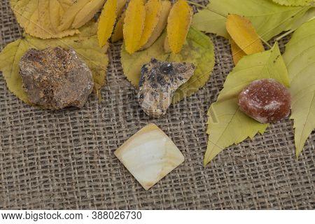 Close-up. On The Yellow Leaves Lie Yellow Semi-precious Natural Stones Hemimorphite, Cerussite, Hali