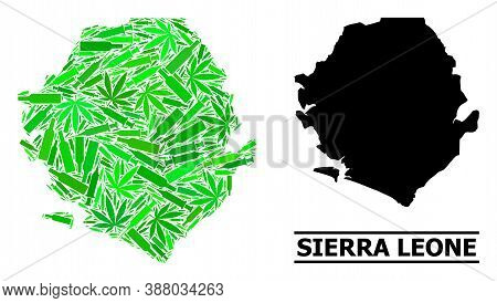 Addiction Mosaic And Usual Map Of Sierra Leone. Vector Map Of Sierra Leone Is Organized From Random