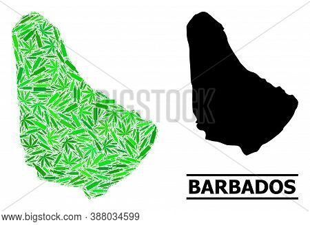 Drugs Mosaic And Solid Map Of Barbados. Vector Map Of Barbados Is Formed Of Scattered Inoculation Ic