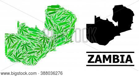 Drugs Mosaic And Usual Map Of Zambia. Vector Map Of Zambia Is Designed Of Scattered Inoculation Icon