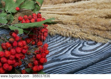 A Bouquet Of Dried Grass And Rowan Branches. They Lie On Black Pine Boards.