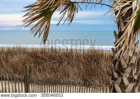Palmetto Tree On The Beach Set Against A Blue Sky With Copy Space In Horizontal Orientation On The G