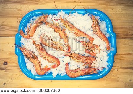 Red Fresh Shrimp Langoustines, Lie On The Ice Blue Tray, Light, Top Side View. Chilled Langoustines