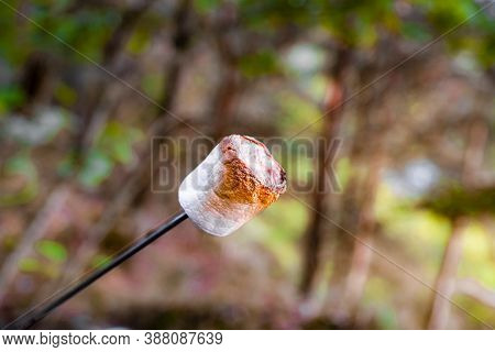 Grilled Marshmallow On Stick. Big Brown Golden Sweet Marshmallow Roasting Over Fire. Marshmallow On