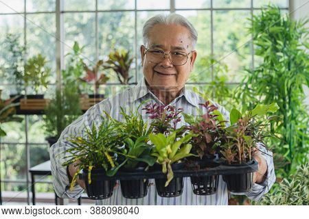 Portrait  Asian Retired Senior Man Holding Seedling And Smiling Happily In Greenhouse. Old Man Hobby