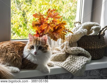 Beautiful Red Cat, Bouquet Of Autumn Maple Leaves, Basket With A Knitted Blanket On The Window Sill.