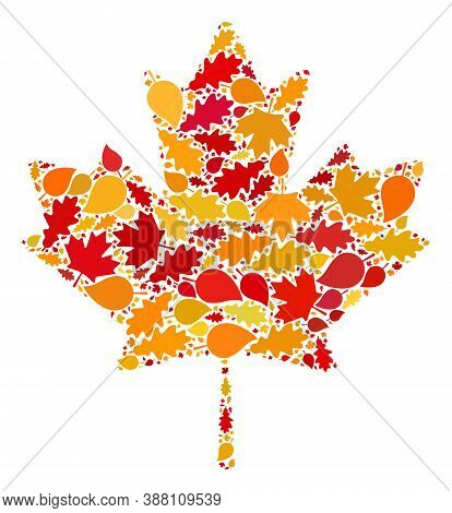 Maple Leaf Composition Icon Done For Fall Season. Raster Maple Leaf Mosaic Is Done With Randomized A