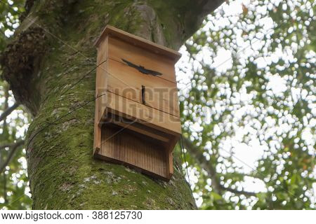 House For Bats On A Tree Overgrown With Moss.