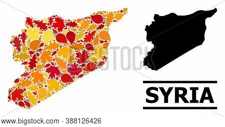 Mosaic Autumn Leaves And Usual Map Of Syria. Vector Map Of Syria Is Constructed Of Random Autumn Map