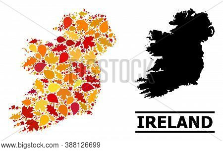 Mosaic Autumn Leaves And Usual Map Of Ireland Island. Vector Map Of Ireland Island Is Created From R
