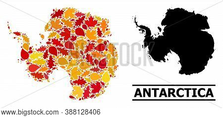 Mosaic Autumn Leaves And Usual Map Of Antarctica. Vector Map Of Antarctica Is Composed From Randomiz
