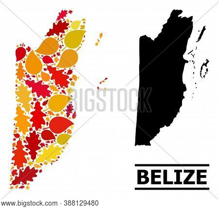 Mosaic Autumn Leaves And Usual Map Of Belize. Vector Map Of Belize Is Done With Scattered Autumn Map