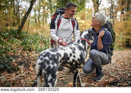 Senior couple hiking with the dog; Active retirment concept