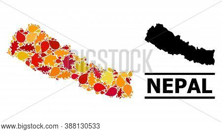 Mosaic Autumn Leaves And Usual Map Of Nepal. Vector Map Of Nepal Is Created With Random Autumn Maple