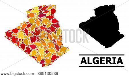 Mosaic Autumn Leaves And Solid Map Of Algeria. Vector Map Of Algeria Is Shaped Of Randomized Autumn