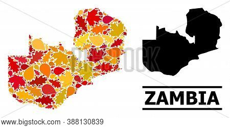 Mosaic Autumn Leaves And Usual Map Of Zambia. Vector Map Of Zambia Is Designed Of Scattered Autumn M
