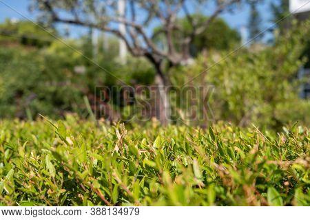 Green Foliage Plants, Texture. Wallpaper, Card, Closeup, Blur Nature Background.