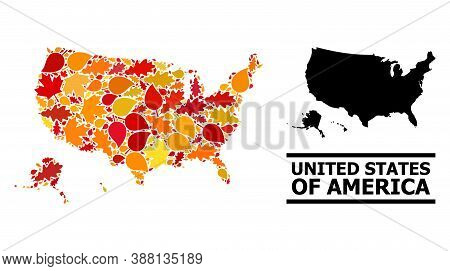 Mosaic Autumn Leaves And Usual Map Of Usa Territories. Vector Map Of Usa Territories Is Composed Wit