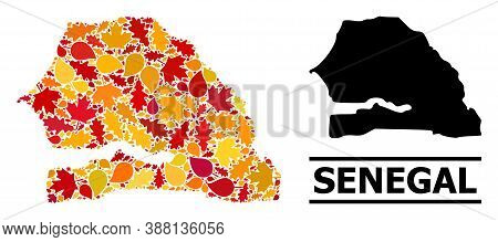 Mosaic Autumn Leaves And Usual Map Of Senegal. Vector Map Of Senegal Is Formed From Random Autumn Ma