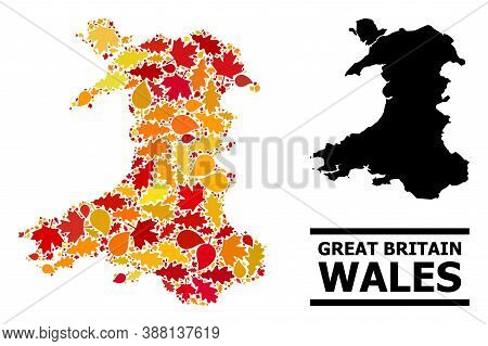 Mosaic Autumn Leaves And Solid Map Of Wales. Vector Map Of Wales Is Constructed With Random Autumn M