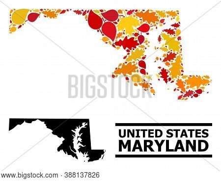 Mosaic Autumn Leaves And Usual Map Of Maryland State. Vector Map Of Maryland State Is Created Of Ran