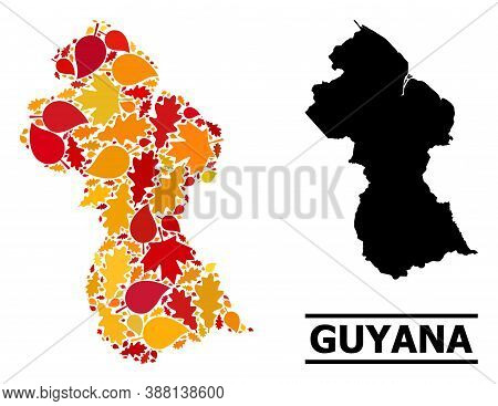 Mosaic Autumn Leaves And Solid Map Of Guyana. Vector Map Of Guyana Is Composed Of Random Autumn Mapl