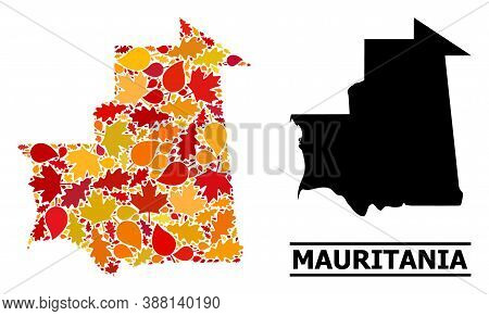 Mosaic Autumn Leaves And Usual Map Of Mauritania. Vector Map Of Mauritania Is Shaped From Random Aut