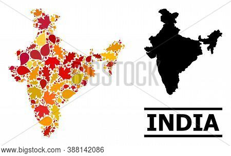 Mosaic Autumn Leaves And Usual Map Of India. Vector Map Of India Is Formed With Randomized Autumn Ma