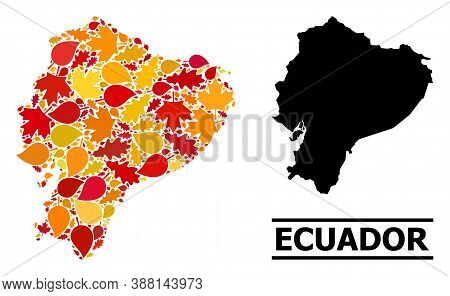 Mosaic Autumn Leaves And Usual Map Of Ecuador. Vector Map Of Ecuador Is Designed With Randomized Aut