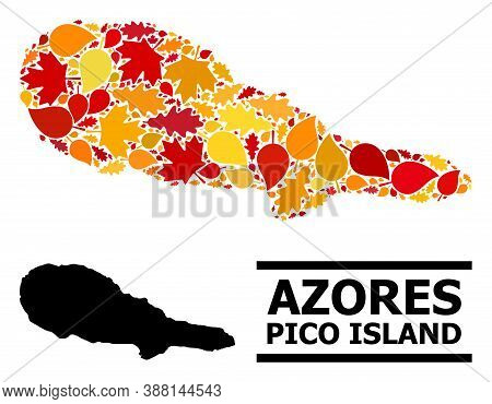 Mosaic Autumn Leaves And Usual Map Of Pico Island. Vector Map Of Pico Island Is Designed With Scatte