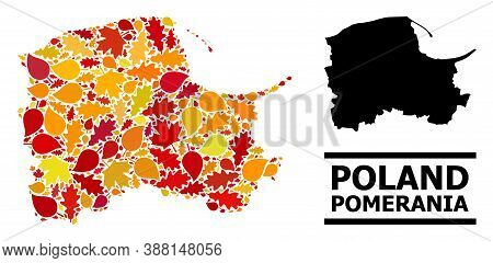 Mosaic Autumn Leaves And Solid Map Of Pomerania Province. Vector Map Of Pomerania Province Is Organi