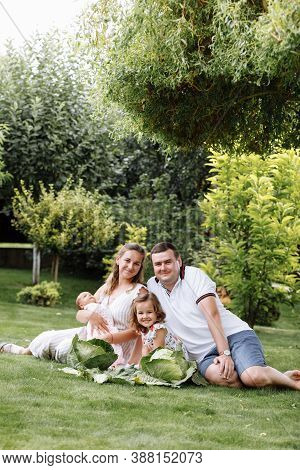 Father, Mother And Two Children, Baby Girl And Little Daughter On The Grass With Cabbages On Summer